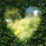 Ładny oraz miły dla oczu ogród to zasługa wielu godzin spędzonych  w jego zaciszu w trakcie jego pielegnacji.
